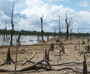 Impactos ocasionados por barragens